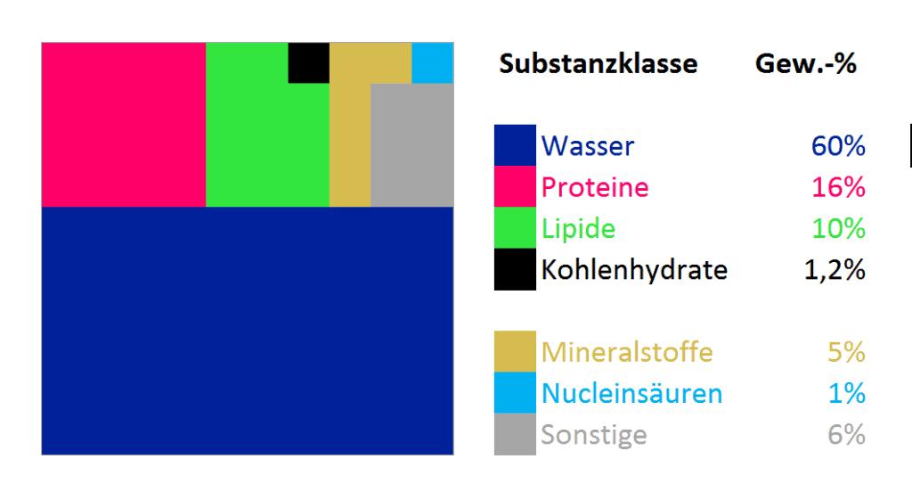 Grafik über die Verteilung der Gewichtsanteile von Substanzen im menschlichen Körper. Wasser, Proteine, Lipide, Kohlenhydrate