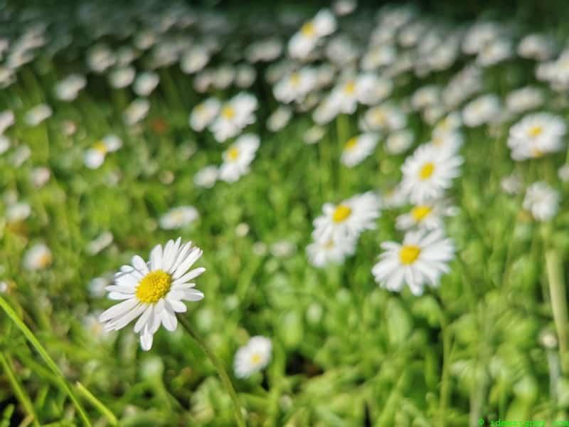 Blumenwiese, Sommersonnenwende am 21. Juni